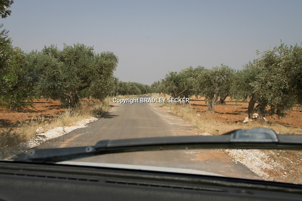 The olive groves of Idlib, five kilometres away from Idlib city.  Idlib province in Syria's northwest is one of the few areas in Syria which is currently under FSA control, although this control is patchy and ever shifting. Kureen, Idlib, Syria. 17/06/2012