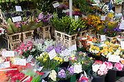 Bunches of flowers at street stall