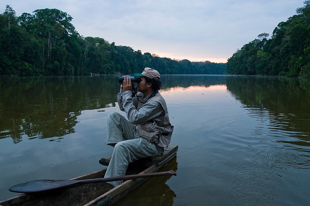 A guide scans the banks of an oxbow lake with his binoculars looking for wildlife from a wooden boat, Manu National Park Reserve Zone, Peru. The Reserve Zone is highly protected, only accessible to a handful of licensed ecotourism companies, professional guides and research scientists.