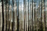 Nederland, Ubbergen, 22-9-2011Door lange sluitertijd en bewogen camera abstracte bomen, bos.Foto: Flip Franssen/Hollandse Hoogte