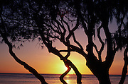 Sunset with tree<br />