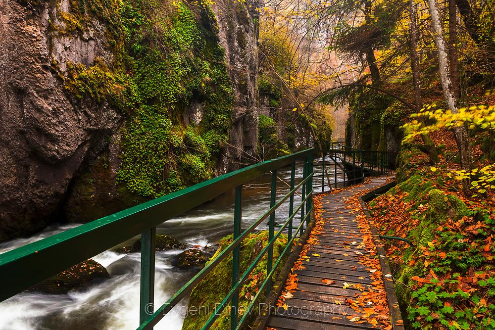 Bridge along the river