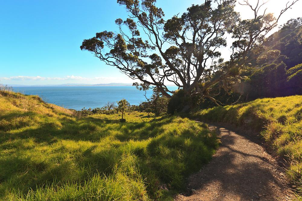 bream head trail whangarei heads