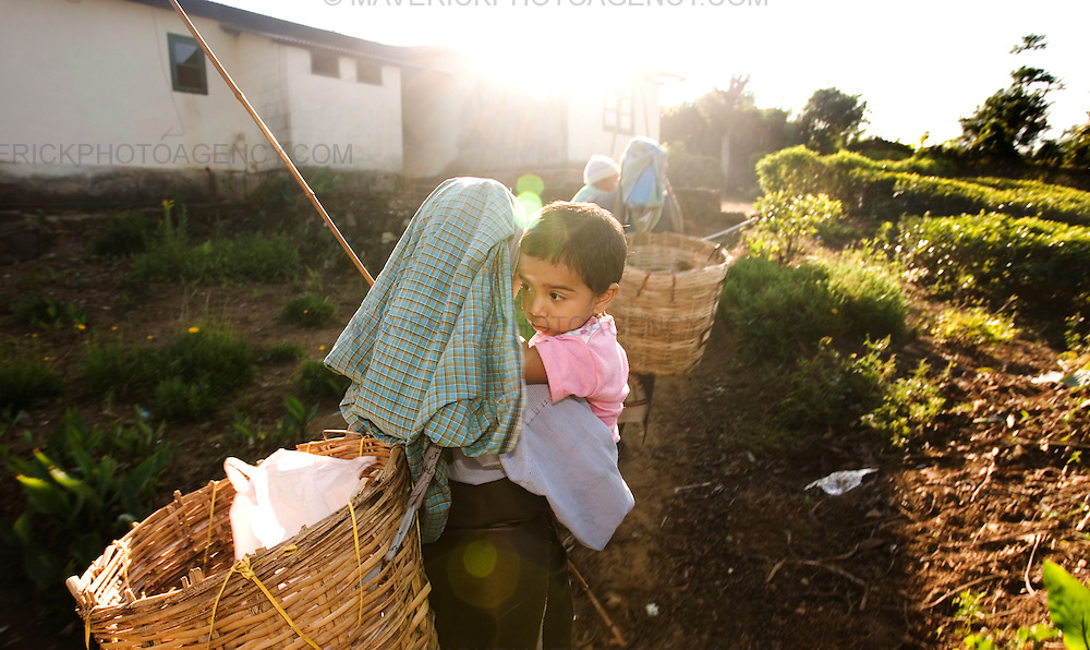 Tea pluckers feed children before going to work on the estate...Sri Lanka is a world leader in tea export, and its tea is considered among the best in the world. British colonists transported thousands of Tamil people from South India under brutal conditions for indentured labour on the plantations. Presently, strong unions and greater awareness of rights has somewhat improved the conditions of tea estate workers who live and work on tea estates. Women form the majority of the workforce and are 'trapped' at the lower end of the labour hierarchy. Female tea-pluckers have to juggle labour with sole-responsibility for family and household-care, normally working 14 hours a day...Picture Michael Hughes/Maverick
