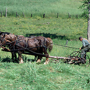 A man guiding a team of horses pulling a traditional grass cutter on a field in Maine