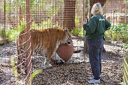 Staff & Tiger, Big Cat Rescueccc