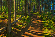 West Blue Lakess Trail<br />Duck Mountain Provincial Park<br />Manitoba<br />Canada