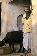 Man and cow in India