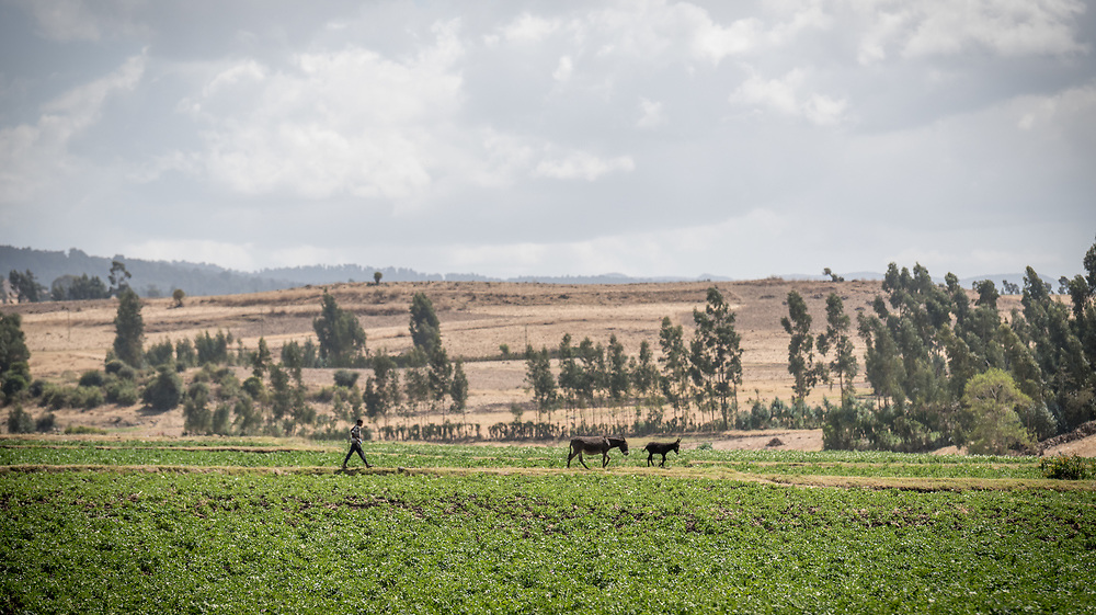 26 January 2019, Ethiopia: A boy walks across a field in Adaba, Ethiopia. The field is nearby an old irrigation and soil conservation site built by the Lutheran World Federation in the 1970s, which remains an important resource for people in the area.