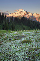 Glacier Peak seen from Miner's Ridge, Glacier Peak Wilderness North Cascades Washington