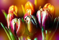 A vibrant and bold tulip assortment with a fresh bouquet of colors, light and mood.
