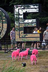 Latitude Festival 2017, Henham Park, Suffolk, UK. Each year the sheep are dyed pink