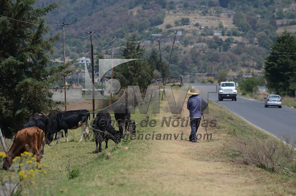 Lerma México (Abril 15, 2016).- Un hombre cuida su ganado mientras comen un poco de pasto a un costado de la carretera en el municipo de Lerma. Agencia MVT / Arturo Hernández.