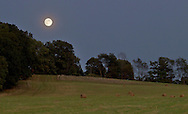 Chester, New York - The almost full moon rises behind trees at Knapp's View on August 30, 2012.