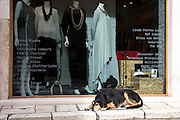 Dog dozing and chilling out on pavement outside Corfiot Greek ladies fashion boutique shop in Kerkyra, Corfu Town, Greece