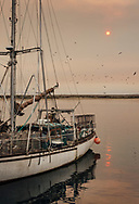 Smoke from the Thomas Fire in Southern California makes the sky dark and the sun red 110 miles north, in Morro Bay, California. ©CiroCoelho.com. All Rights Reserved.