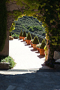 A line of potted shrubs on the grounds of the Domaine de Durban Winery in Beaumes-de-Venise, France