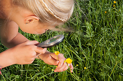 Girl (10-11) watching flowers through magnifying glass, elevated view, close-up