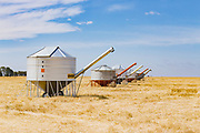 Mobile field bin grain silos in paddock after wheat harvest near Rupanyup, New South Wales, Australia <br /> <br /> Editions:- Open Edition Print / Stock Image