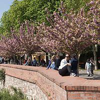 People walk under cherry blossom in Budapest, Hungary on April 15, 2019. ATTILA VOLGYI