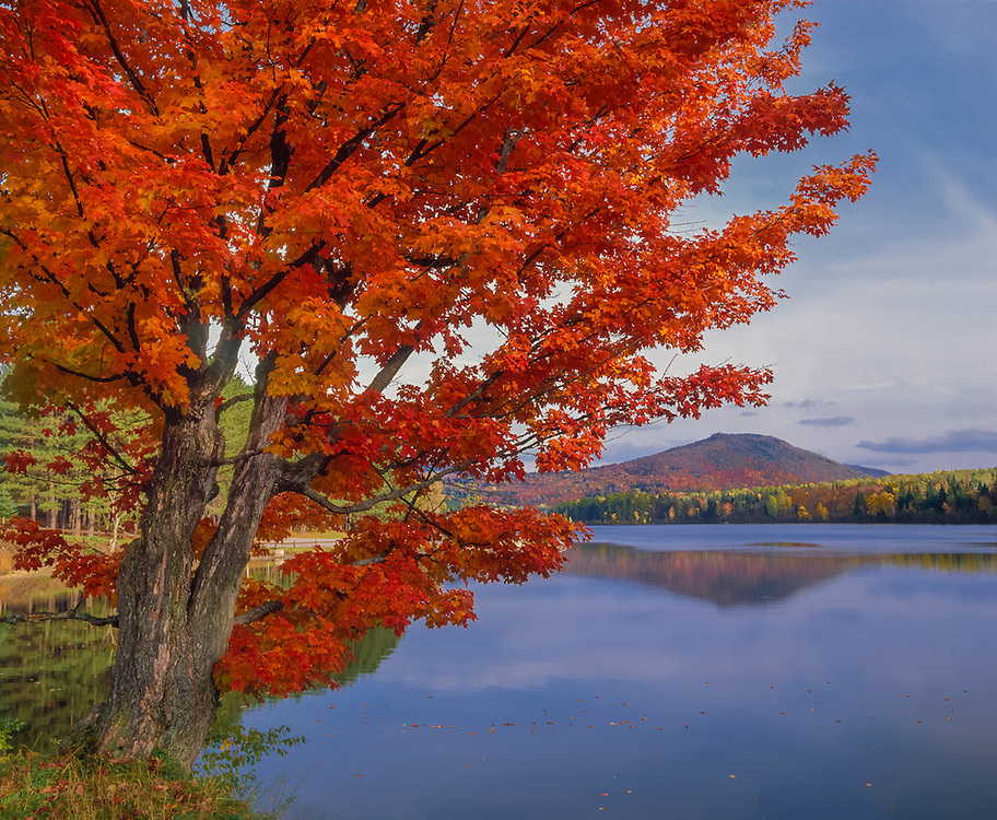 Sugar maple tree in fall with Mollys Falls Pond & mountain view, Cabot, VT
