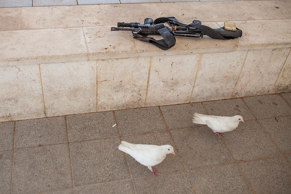 """Two white doves are seen next to rifle of an Israeli soldier (unseen) that is feeding them .<br /> <br /> There are many pidgeons especialy white all around the site, they are being released by the clergyme during the ceremony at the Day of the Epiphany as part of the ritual commemorating the baptism of Jesus and his spiritual birth in the form of a dove coming out of the sky.<br /> **Matthew 3:13-17**<br /> """"...Then John yielded to him. 16 After Jesus was baptized, just as he was coming up out of the water, the heavens opened and he saw the Spirit of God descending like a dove and coming on him. 17 And a voice from heaven said, """"This is my one dear Son; in him I take great delight."""""""