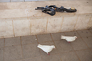 "Two white doves are seen next to rifle of an Israeli soldier (unseen) that is feeding them .<br /> <br /> There are many pidgeons especialy white all around the site, they are being released by the clergyme during the ceremony at the Day of the Epiphany as part of the ritual commemorating the baptism of Jesus and his spiritual birth in the form of a dove coming out of the sky.<br /> **Matthew 3:13-17**<br /> ""...Then John yielded to him. 16 After Jesus was baptized, just as he was coming up out of the water, the heavens opened and he saw the Spirit of God descending like a dove and coming on him. 17 And a voice from heaven said, ""This is my one dear Son; in him I take great delight."""