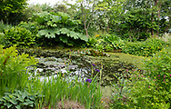 A pond surrounded by plants in the Dingle Water Garden at Stockton Bury Gardens, Kimbolton, Leominster, Herefordshire, UK