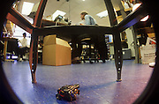 """Squirt"" is a robot that hides in the dark, M.I.T., Insect Robot Lab, Cambridge, MA"