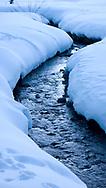 A stream runs through a snowy landscape near the site of a wolf kill in the wintertime in Idaho.