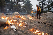 Larimer County Sheriff's Office firefighter Quinn de la Haye uses a drip torch to ignite unburned fuel to protect structures from the East Troublesome Fire in Rocky Mountain National Park, October 24, 2020. © 2020 William A. Cotton