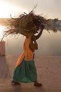 Woman carries fire wood on her head, Pushkar, Rajasthan, India