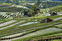 Indonesie, Ile de Bali, Rizieres dans le centre de l'Ile // Indonesia, Bali Island, rice field, centre of the island