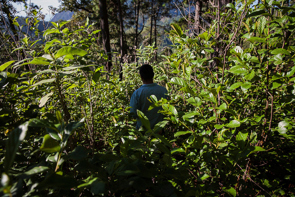 El CALVARIO, MEXICO - AUGUST 5, 2015: A man walks by intricate paths during 6 hours round trip to get into the mountains and works in the poppy opium fields located in the gullies, that allow that these are not visible from air, Mexico. Rodrigo Cruz for The New York Times