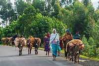 People walking to market, Amhara region, Ethiopia.