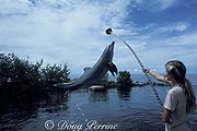 bottlenose dolphin, Tursiops truncatus, jumps for trainer, Dolphin Research Center, Grassy Key, Florida Keys, USA ( Gulf of Mexico )