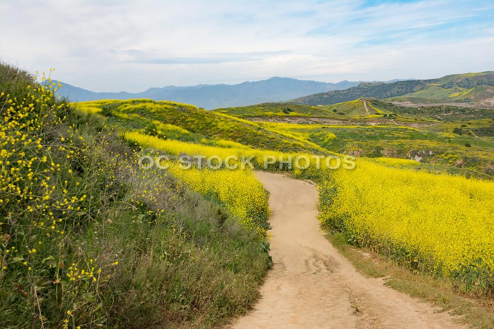 Hiking Trails at Las Ramblas In San Juan Capistrano