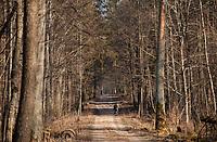 03.2015 Puszcza Bialowieska N/z lesna droga przez puszcze fot Michal Kosc / AGENCJA WSCHOD