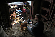 The Wortmans' neice Heather Thomasovich, 17, of Califon, N.J., sits in the hay loft away from the crowds with Oscar the cat, during the auction at Green Acres farmin South Randolph, Vt. Saturday, May 14, 2016. Thomasovich has spent several summers visiting and helping on the farm. (Valley News - James M. Patterson) Copyright Valley News. May not be reprinted or used online without permission. Send requests to permission@vnews.com.