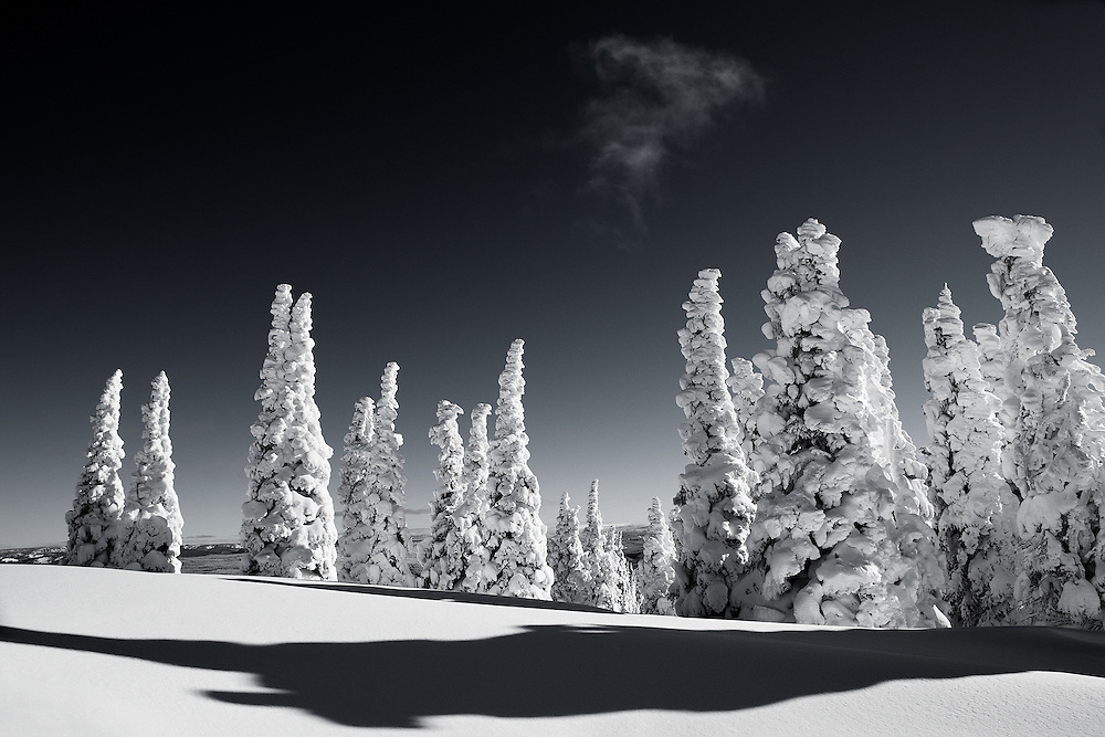 Tracie Spence's fine art photography 'Joy To the World'