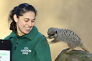 ZSL London Zoo Annual Stocktake 2016