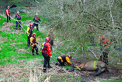 © Licensed to London News Pictures. 31/03/2014. Radcliffe, UK Greater Manchester Fire and Rescue service rescue a horse from the River Irwell in Radcliffe. 21 year old Ruby, who only has one eye, lost her footing and fell in on Monday (31st March 2014) and was unable to get out of the water. Her owner called 999 and firefighters from Broughton, Whitefield and Bury stations were called to help out. After a rest, Ruby was able to stand and made her way back to her stable. Photo credit : GMFRS/LNP