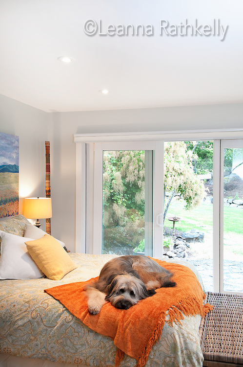 Artist Ginny Glover and her husband David Stuart have renovated a small bungalow in Ten Mile Point and infused it with contemporary style. Their dog Kali enjoys a cozy blanket snooze spot on the bed.