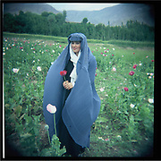 A young woman stands in the poppy field, Badakshan.