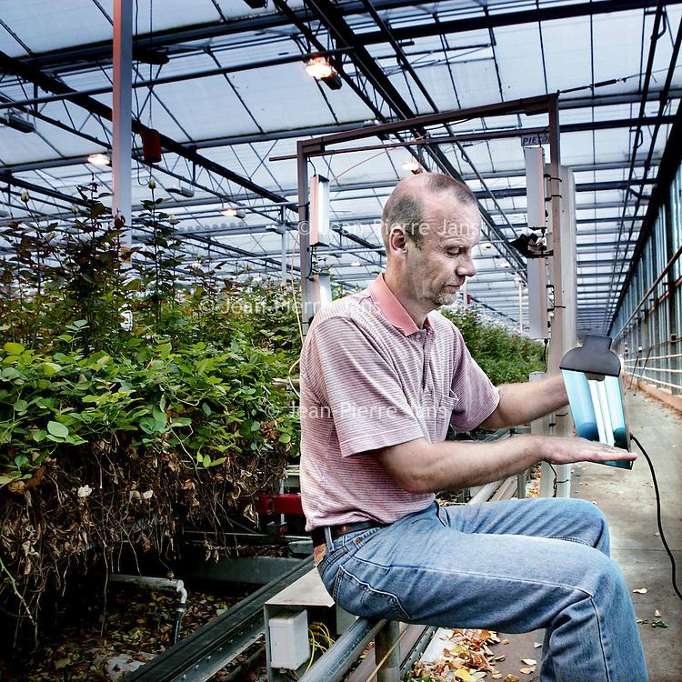 Nederland, Nieuwaal , 1 september 2009..Chief Technology Officer.Arne Aiking demonstreert Clean Light in een Bloemenkas..Clean Light is het bedrijf dat de UV-gewasbeschermings-techniek heeft uitgevonden, gepatenteerd en praktijkrijp gemaakt..UV-gewasbescherming is een innovatieve techniek die het mogelijk maakt om schimmels, bacteriën en virussen te bestrijden op veel belangrijke landbouwgewassen, zonder chemicaliën. De kosten besparingen voor de producent alsmede de volksgezondheidsvoordelen voor de consument spreken voor zich..Clean Light is the company that has invented, patented the UV-plant protection technology and made it ready for use..UV plant is an innovative technique that allows fungi, bacteria and viruses to fight on many important agricultural crops without chemicals.
