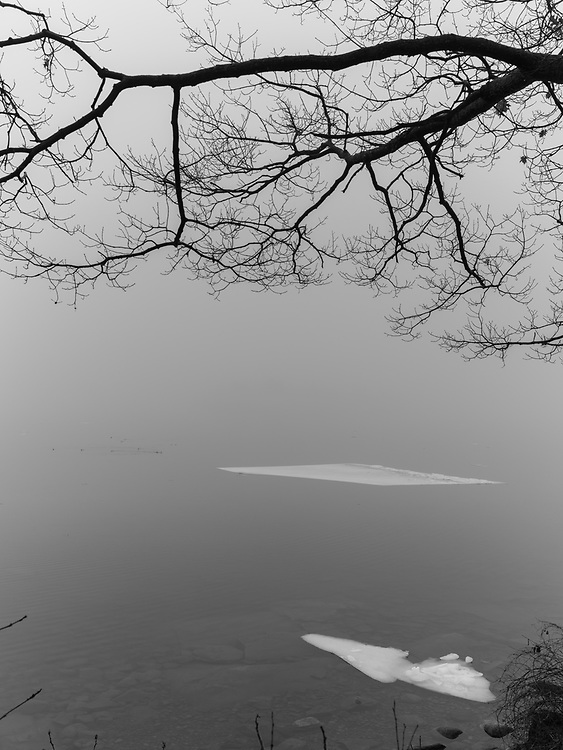 http://Duncan.co/tree-branch-and-floating-ice