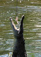 Crocodiles in Darwin Crocodile Park