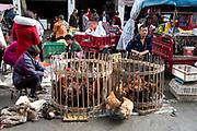 Open air food market in Chengdu, Sichuan, China