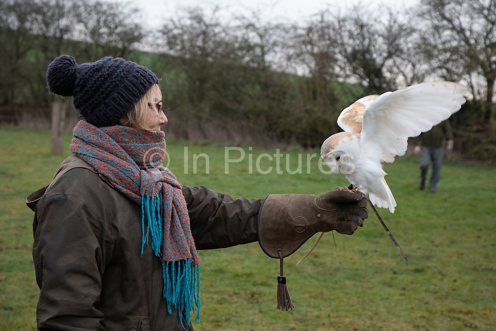 Birds of prey on show during a falconry display near Stratford-upon-Avon, England, United Kingdom. Here a Barn Owl with pure white feathers is on the falconers glove with a member of the public on the falconry morning.
