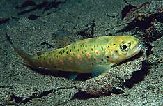 European Freshwater Life